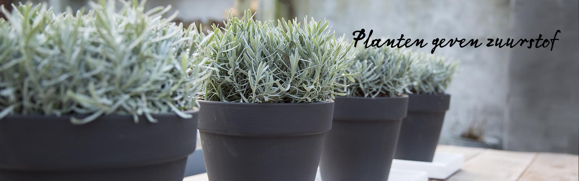 Vaak Planten binnen en buiten #NZ01